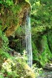Vattenfall i trät Arkivbild