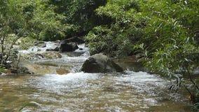 Vattenfall i tropisk regnskog arkivfilmer