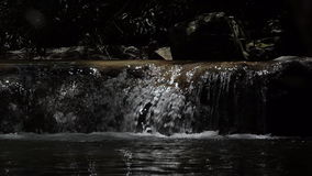 Vattenfall i tropisk regnskog stock video