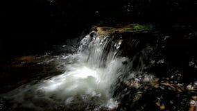 Vattenfall i tropisk regnskognaturbakgrund lager videofilmer