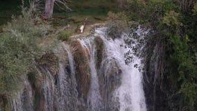 Vattenfall i ultrarapid i grön natur arkivfilmer