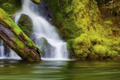 Vattenfall längs Salmon River Mt Hood National Forest arkivfoton