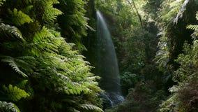 Vattenfall` lind`en, i ön av La Palma, kanariefågelöar, Spanien arkivfilmer