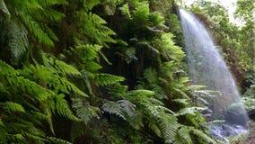 Vattenfall lindarna, i ön av La Palma, kanariefågelöar, Spanien lager videofilmer