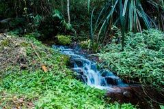Vattenfall Mae Kham Pong arkivfoton