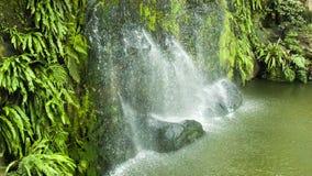 Vattenfall med den gröna bladöglan lager videofilmer