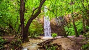 Vattenfall med en flod i skogen lager videofilmer