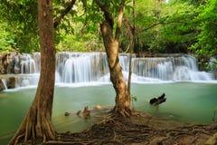 Vattenfall med trädet Royaltyfri Foto