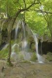 Vattenfall med trädet Royaltyfria Bilder