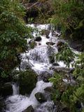 Vattenfall nära svalgen Milford NZ Arkivbilder