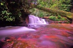 Vattenfall- och blåttström i skogen Royaltyfri Foto