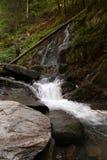 Vattenfall och flod i skog Royaltyfri Bild