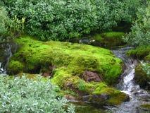 Vattenfall och moss Royaltyfri Fotografi