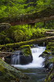 Vattenfall och stupade träd i medborgareForest Washington för skog det olympiska tillståndet Royaltyfria Bilder