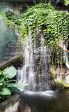 Vattenfall på den Omaha Zoo Tropical djungeln Arkivfoto