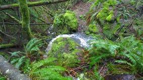 Vattenfall på den södra Pender ön Fotografering för Bildbyråer