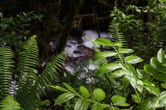 Vattenfall på Inca Trail på vägen till Machu Picchu, Peru royaltyfri bild