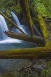 Vattenfall på Murhut liten vik i olympisk nationalskog i staten Washington Arkivfoto