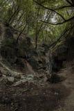 Vattenfall som fördjupas i gräsplanen av en skog Arkivfoto