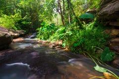 Vattenfall som flödar från skogen Arkivbilder