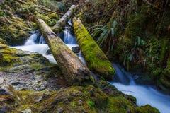 Vattenfall under trädnedgång arkivfoto