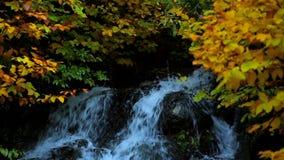 VattenfallAutumn ForestLong Trees In Autumn skog arkivfilmer