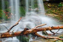 Vattenfallet i det naturligt parkerar Royaltyfria Bilder