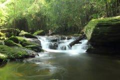 Vattenfallet med frodig lövverk och mossigt vaggar Arkivfoto