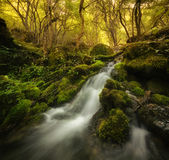 Vattenfallet på bergfloden med mossa vaggar på Royaltyfria Foton