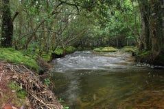 Vattenfallet på Phu Kradueng av Thailand Royaltyfri Foto