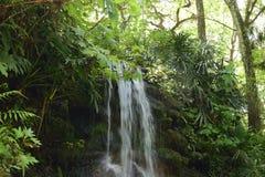 Vattenfallet som flödar ner täckt mossa, vaggar i våren på en Florida delstatspark Arkivbilder
