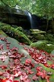 Vattenfallnaturen landskap Royaltyfria Foton