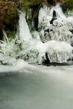 vattenfallträ Royaltyfri Fotografi