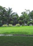 Vattenfallträd och gröna gräs Royaltyfri Bild