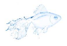 Vattenfiskfärgstänk som isoleras på white Royaltyfri Fotografi