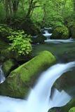 Vattenfjäder i skog arkivfoto