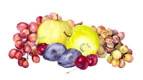 Vattenfärgfrukter: äpple druva, körsbär, plommon akvarell Royaltyfri Fotografi