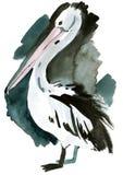 Vattenfärgillustration av pelikan i vit bakgrund Fotografering för Bildbyråer