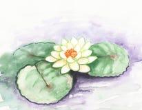 Vattenfärgnäckrosblomma på sjön För vit kortdesign lilly alba nymphaea Arkivfoto