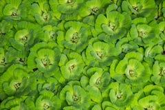 Vattengrönsallat Royaltyfria Bilder