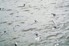 Vattenhavsbakgrund med en stor gruppflock av att flyga för seagulls arkivfoto