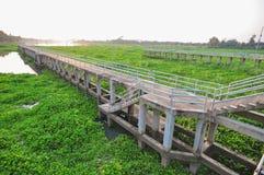 vattenhyacint i floden arkivfoto