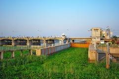 vattenhyacint i floden royaltyfri foto