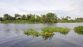 Vattenhyacint som svävar i floden Oops! Din beskrivning har endast 6 ord att ge din bild mer möjligheter att sälja, genom att för Arkivfoto