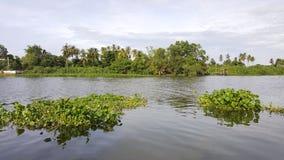 Vattenhyacint som svävar i floden Oops! Din beskrivning har endast 6 ord att ge din bild mer möjligheter att sälja, genom att för Arkivbild