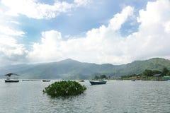 Vattenhyacint som svävar i Phewa sjön Royaltyfri Fotografi