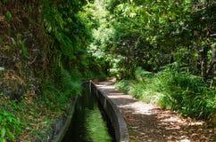 Vattenkanal och vandringsled i madeiradjungel Fotografering för Bildbyråer