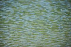 Vattenkrusningstextur Arkivbilder