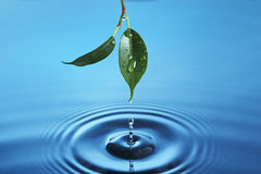 Vattenliten droppe Fotografering för Bildbyråer
