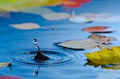 Vattenliten droppe i damm med höstleaves Arkivbilder